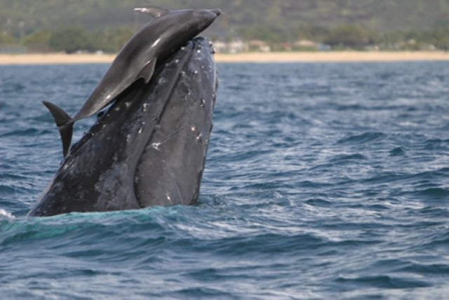 dolphin_whale