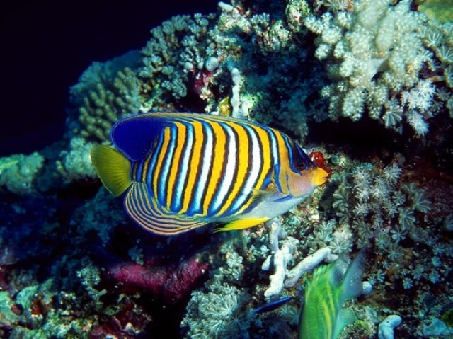 Coral reef fish, colorful fish under the sea