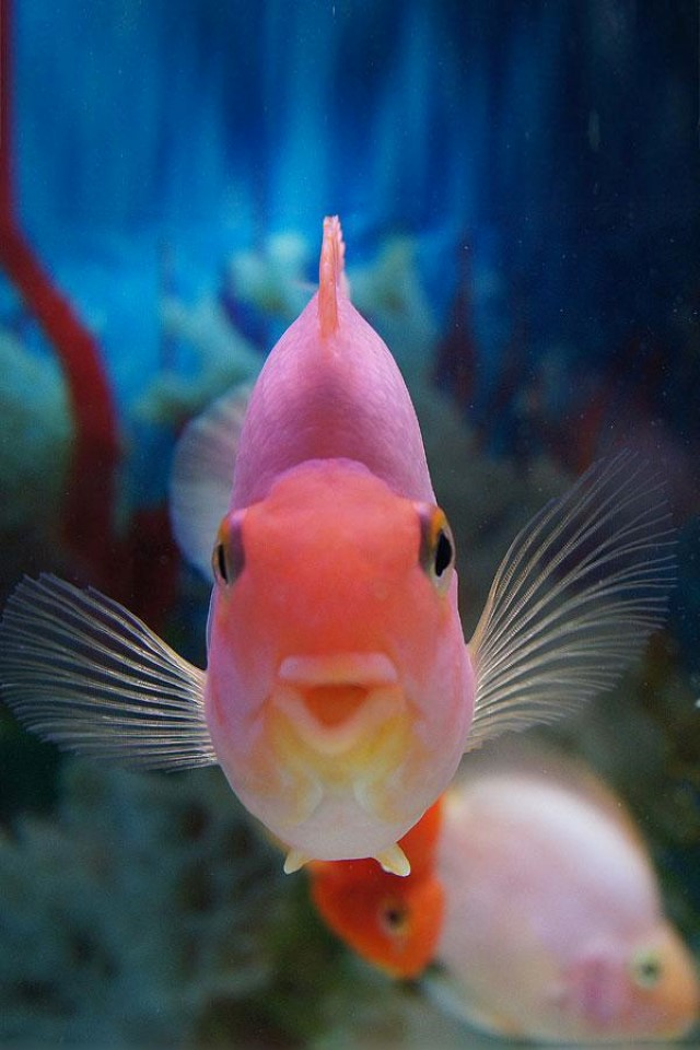 Fish-underwater-photography-32968125-600-900