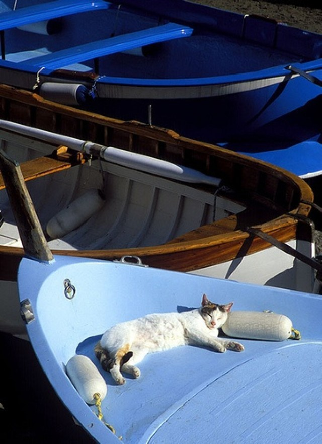 Cats make great sailors 26 photos click here the ocean for Cats go fishing