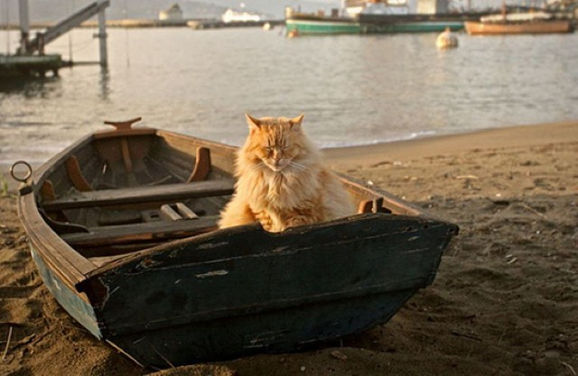 cat-in-boat, cats make great sailors