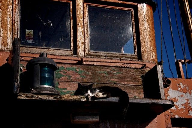 cat on a tugboat on the ocean, cats make great sailors