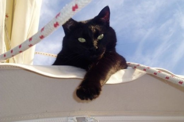 Cats make great sailors (26 photos) CLICK HERE