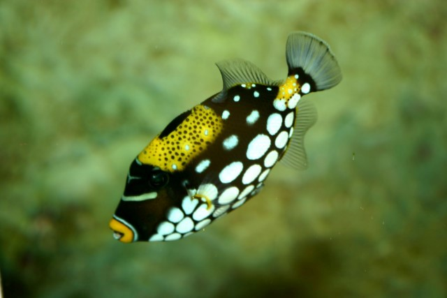 Coral reef fish yellow - photo#12