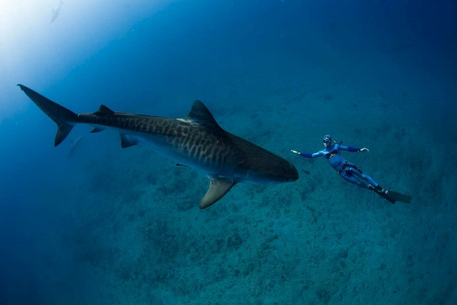 William Winram and Tiger shark near South Africa.