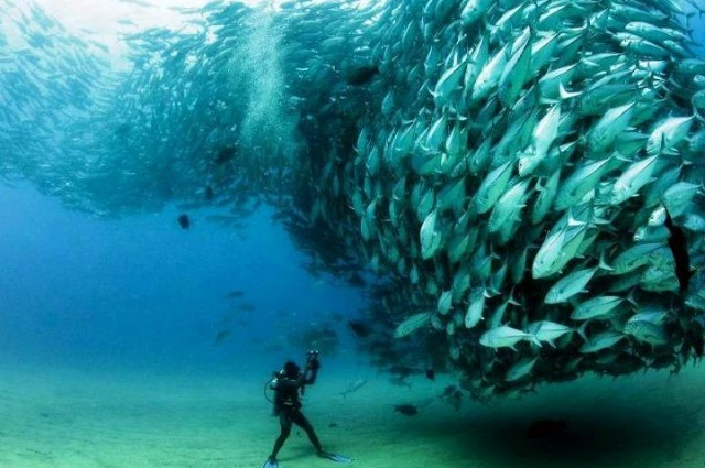 Life under the sea (24 photos) CLICK HERE