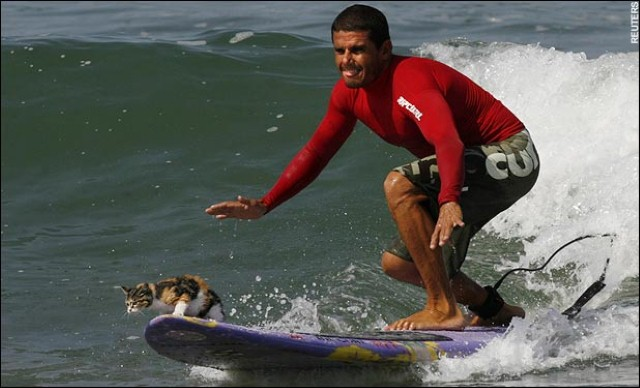 surfing_cat, cats make great sailors