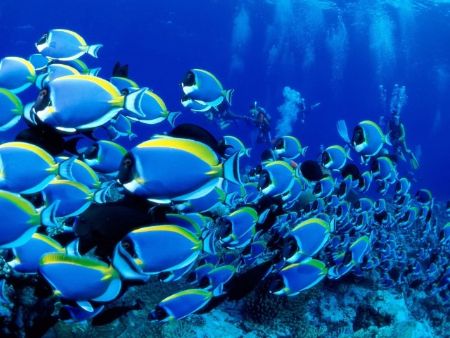 underwater-fishes-wallpaper-7831-hd-wallpapers