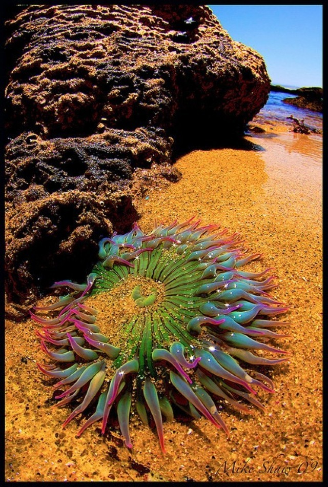 coral in sand