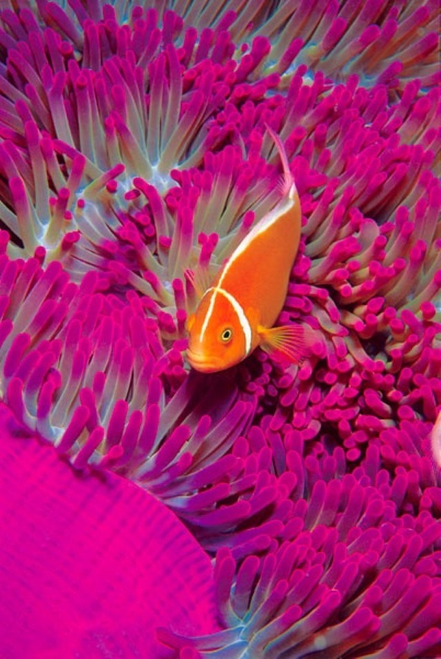 coral reef with orange fish