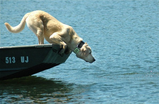 dog over water