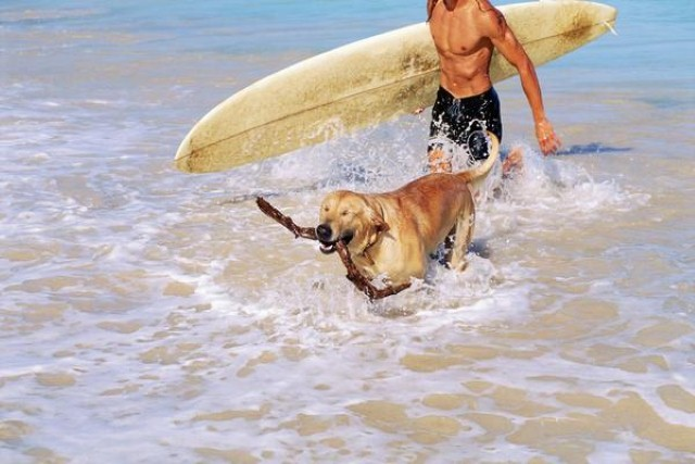dog with surfer