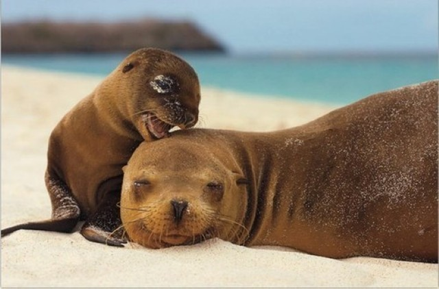 Cuteness comes from the sea (31 photos) CLICK HERE