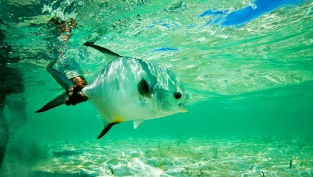 Our favorite lodge in Mexico, The Palometa Club, is arguably the best permit fishing lodge in the world.decryptedKLR